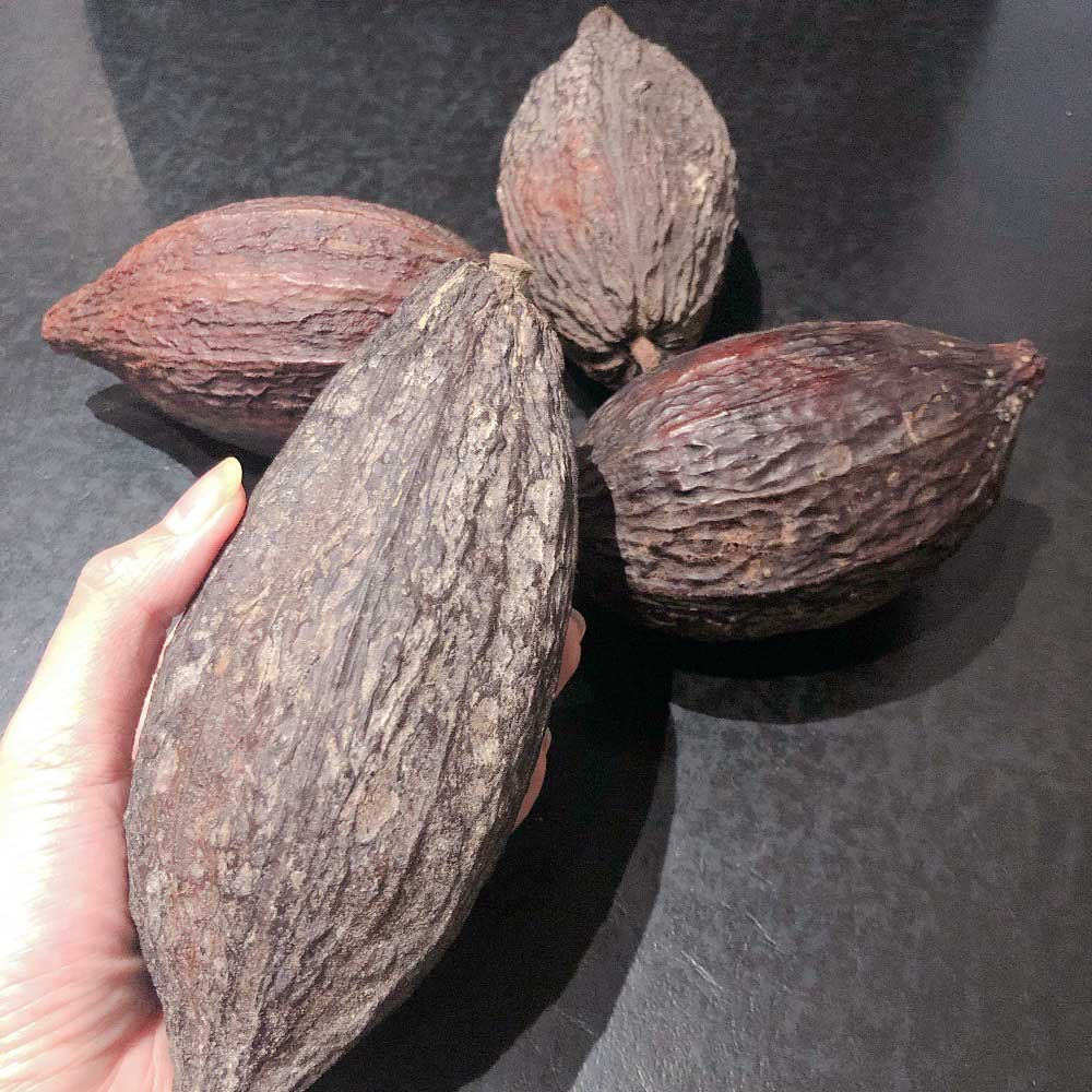 urban-nutters-chocolate-dried-cacao-pods-differences