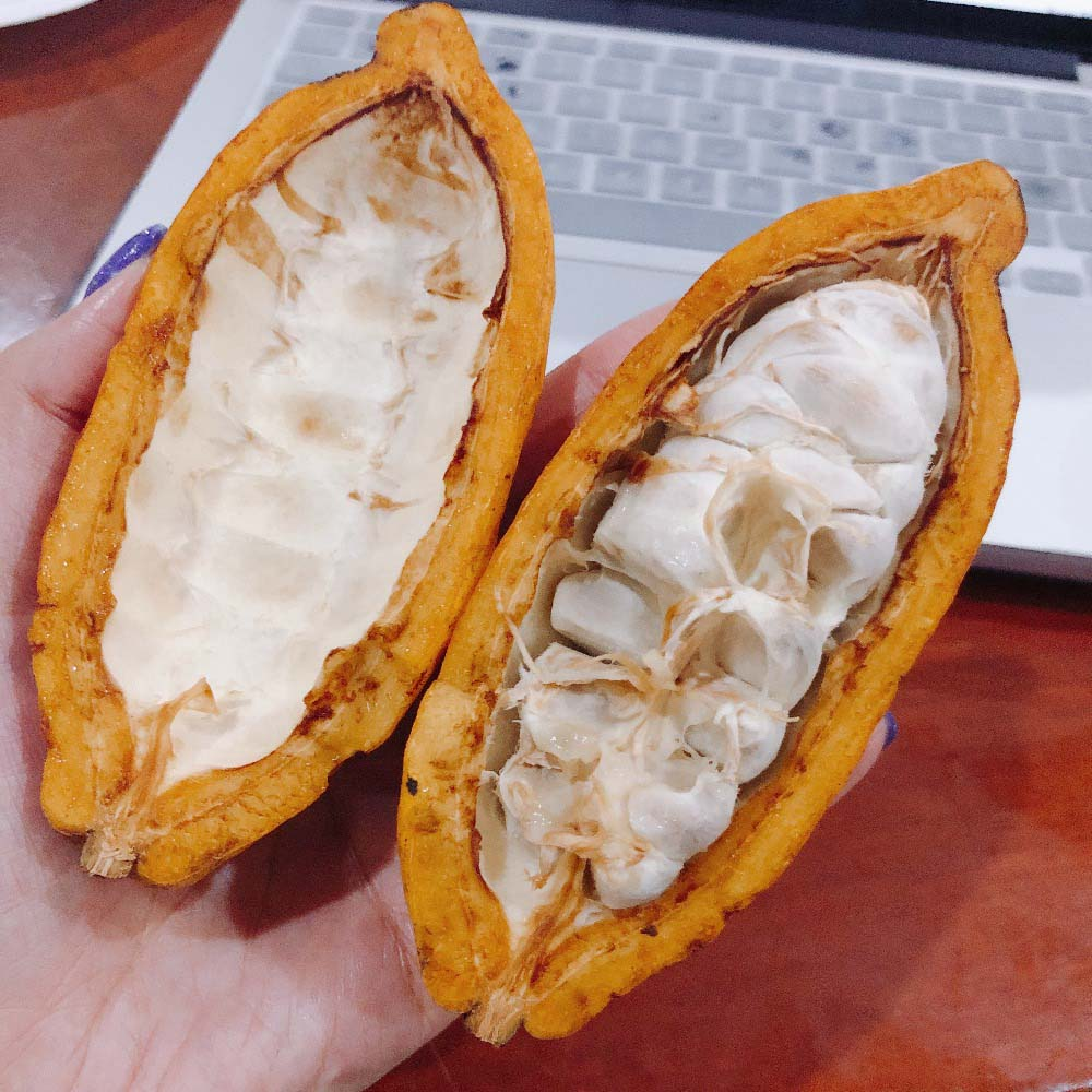 urban-nutters-chocolate-fresh-cacao-pods-differences