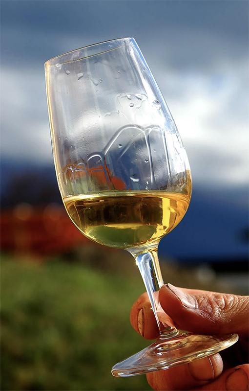 urban-nutters-expert-blog-vivian-lee-wine_legs_body