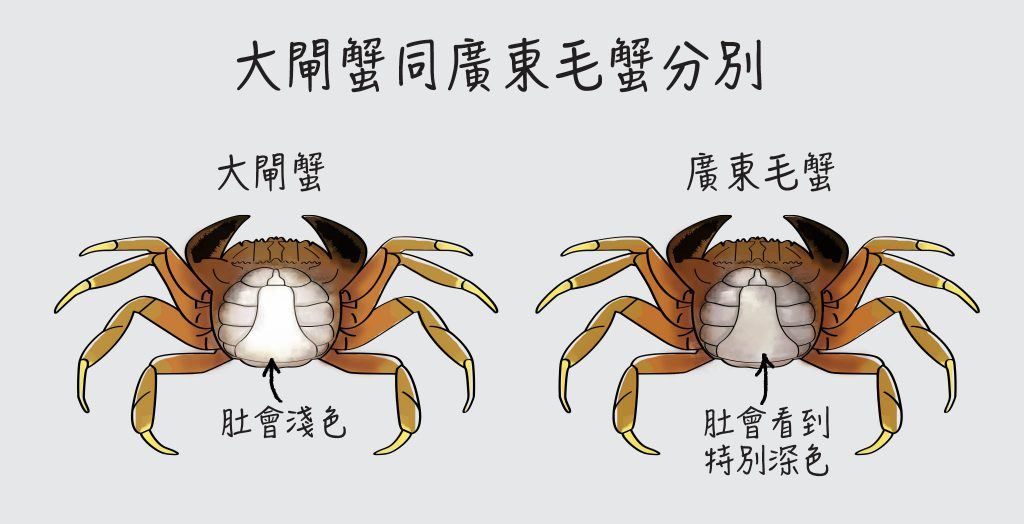 urban-nutters-wiki-chinese-cuisine-shanghai-mittencrab_difference